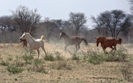 horses-copy